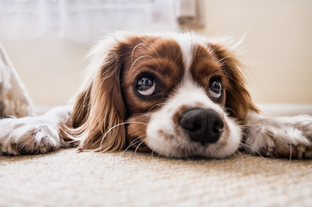 La muerte de un perro por falta de cuidados es causa de prisión